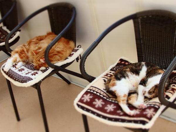 椅子の上で昼寝する猫たち