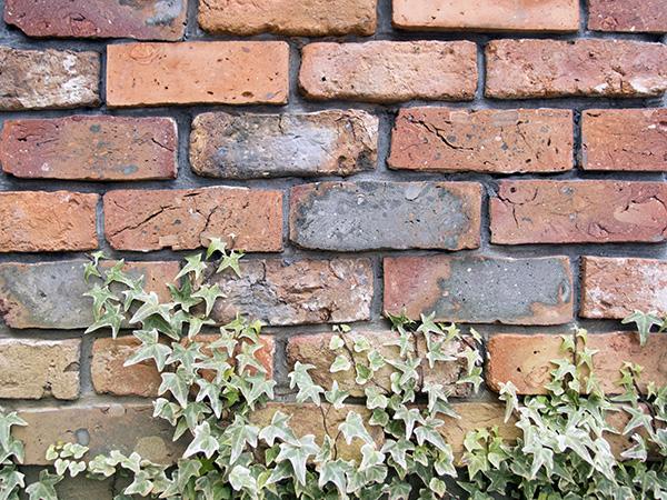 レンガの壁とからまるツタ
